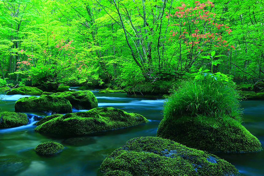 Oirase Keiryu Mountain Stream's photo