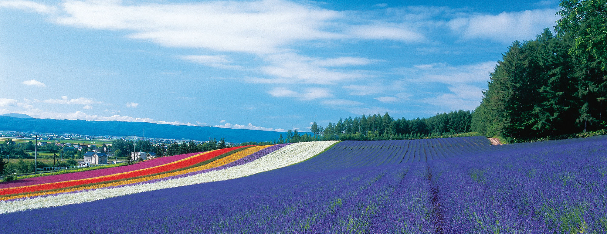 Lavender Fields Hokkaido Is Japan Cool Travel And