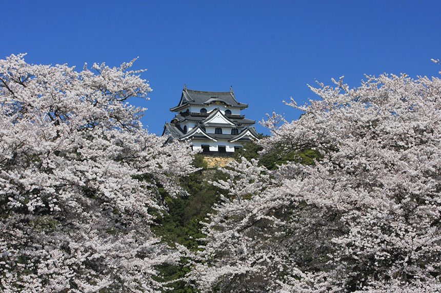 Hikone Castle's photo